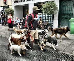 A Paris dog walker