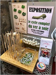 Lyon is famous for silk. We are outside a shop and here is her display!  Live worms squirming around in a dish and more spinning cocoons!!!  Click for a larger view